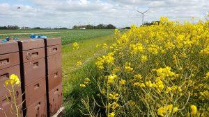 Bienenwanderung_Anmeldung